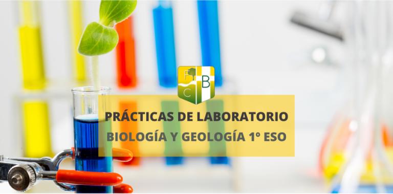 Laboratorio 1º ESO Biología y Geología_Fundación Colegio Bérriz