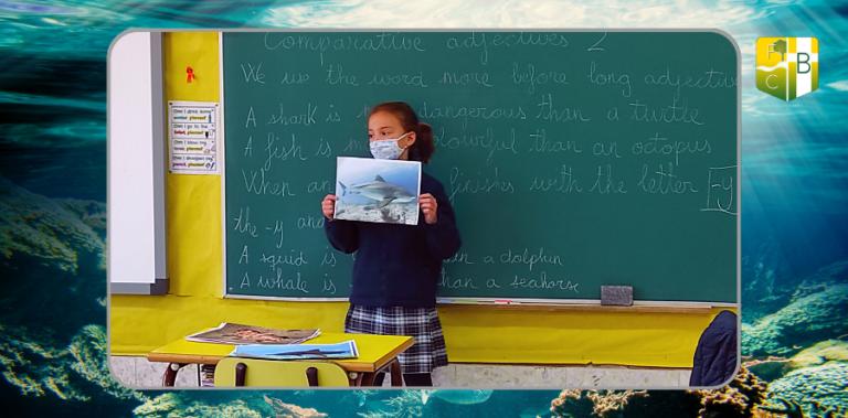 Sharks, 3º Primaria - Fundación Colegio Bérriz