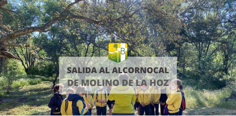Salida al Alcornocal de Molino de la Hoz Las Rozas - Fundación Colegio Bérriz