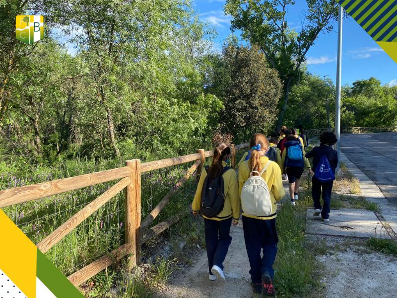 Salida al Bosque de Alcornoques de Molino de la Hoz 1 - Fundación Colegio Bérriz