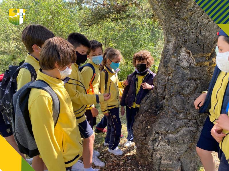 Salida al Bosque de Alcornoques de Molino de la Hoz 2 - Fundación Colegio Bérriz